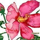 Hibiscus palustris (Swamp Rose Mallow) by Carol Kroll