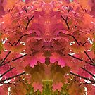 Autumn trees with pink and orange leaves - nature at its best by SJMcDermott