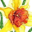 Narcissus by Carol Kroll