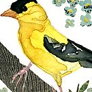 Spinus Tristis (American Goldfinch #2) by Carol Kroll