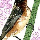 Dendroica castanea (Bay-breasted Warbler) by Carol Kroll