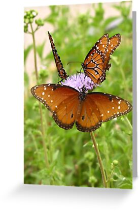 Butterfly ~ Trio of Queens by Kimberly Chadwick