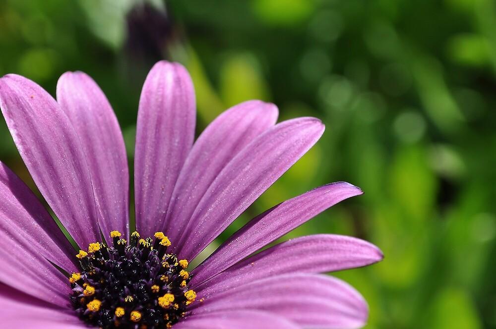 The Purple by csouzas