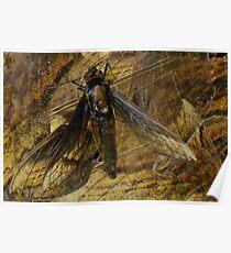 Moth Wings Poster
