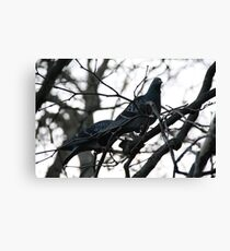 Perched up in a tree Canvas Print
