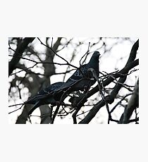 Perched up in a tree Photographic Print