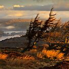 Morning mist over Windermere by Shaun Whiteman