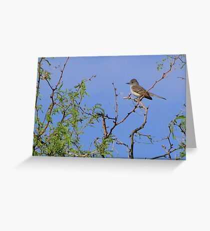 Ash-throated Flycatcher Greeting Card