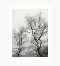 Crows on bare trees in winter Art Print