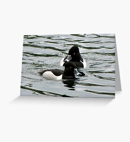 Ring-necked Ducks ~ Males Greeting Card