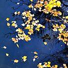 Fall by Ellinor Advincula