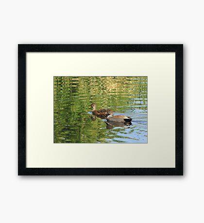 Gadwall ~ Pair Framed Print