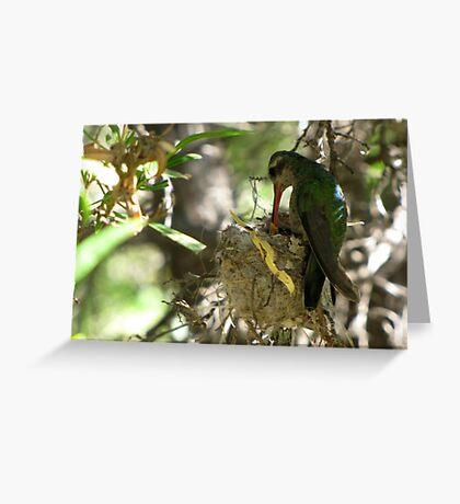 Broad-billed Hummingbird ~ Life Begins Greeting Card