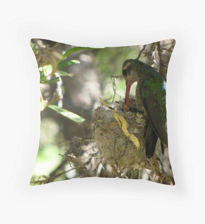 Broad-billed Hummingbird ~ Life Begins Throw Pillow