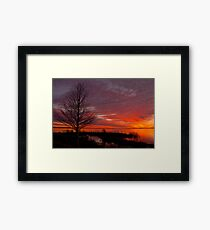 Cypress Silhouette Framed Print