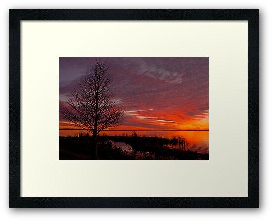 Cypress Silhouette by Shane Jones