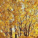 arbre de rêve by Aimelle