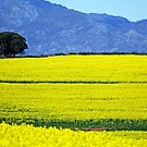 Fields - South Africa by Leon Heyns