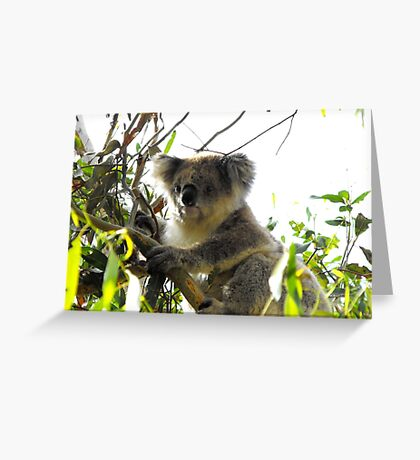 Old Man in the Tree Greeting Card