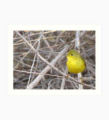 Yellow Warbler ~ Adult Art Print