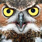 """Bright Eyes"" - Great Horned Owl by ArtThatSmiles"