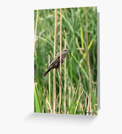 Red-winged Blackbird ~ Female Greeting Card