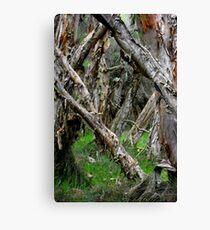 Capel Cemetery Grounds WesternAustralia Canvas Print