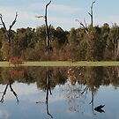 Water Resurrection - Young Rd, Torrumbarry by Dave Callaway