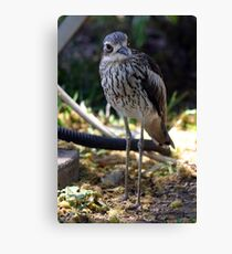 Bush-thick Knee Canvas Print