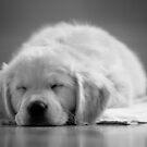 Snoozing.. by Paul Moore