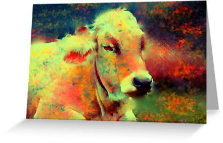cow lying down by rosalin