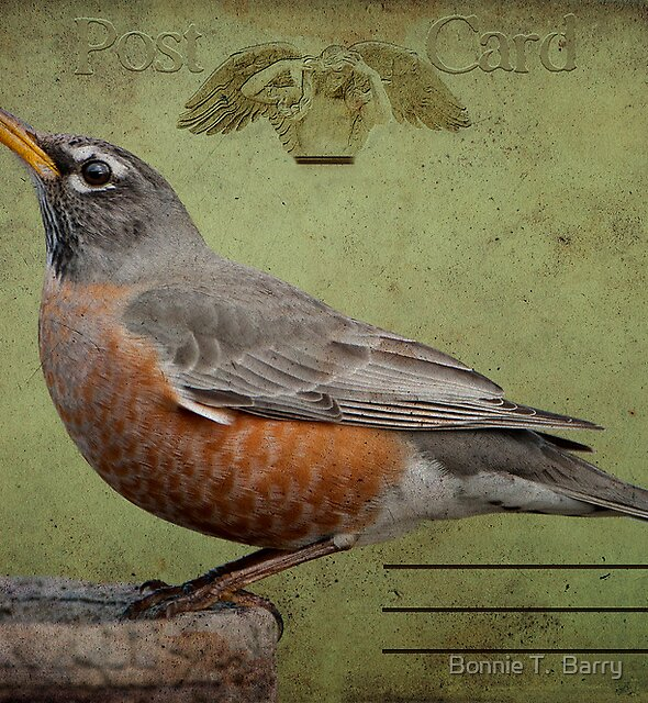 Vintage Robin Postcard by Bonnie T.  Barry