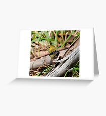 WO ~ PARDALOTE ~ Forty-spotted Pardalote by David Irwin 041119 Greeting Card