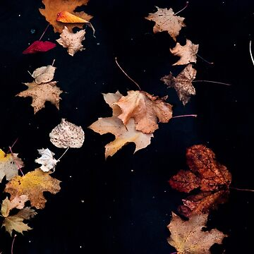 Fall Leaves 2 by JNTremblay