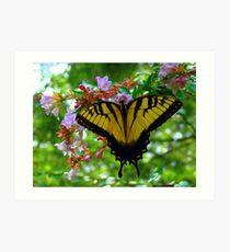 Summertime Fun Butterfly Art Print