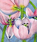 Tulips by Val Spayne