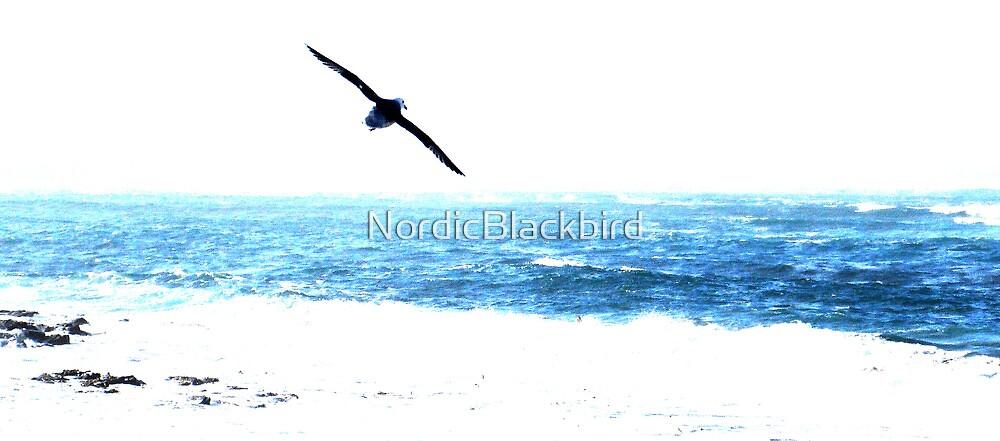 the bird and the sea by NordicBlackbird