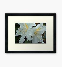 Rhododendrum Magregoriae 2 Framed Print