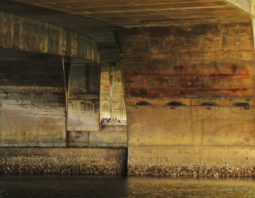 Cormortants Under The Waldport Ore. Bridge by Diane Arndt