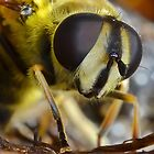 Hoverflies Head by relayer51
