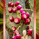 Prickly Pear Buds Framed by George Lenz