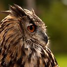 Eagle Owl by Nick Jermy