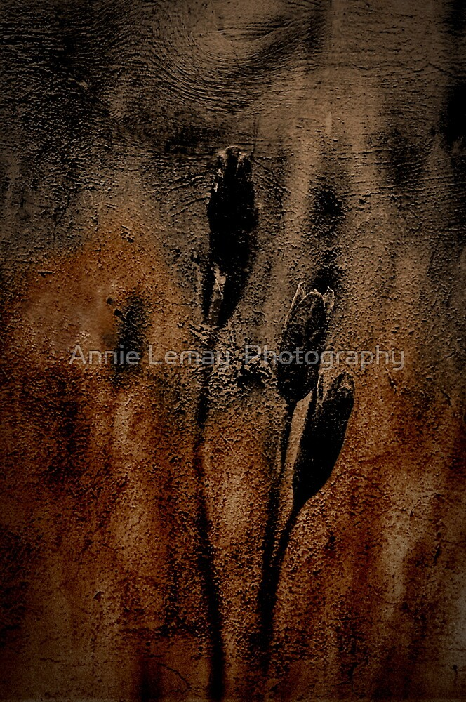 Midnight Dreams by Annie Lemay  Photography