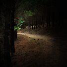 Glimpse by Lux Enbom