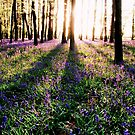 Bluebell Shadows by Mark Greenwood