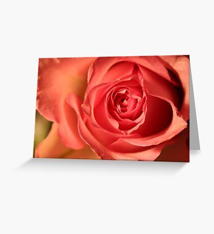 Soft Pink Rose 258 Views Greeting Card