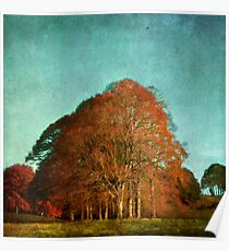 trees in the fall Poster