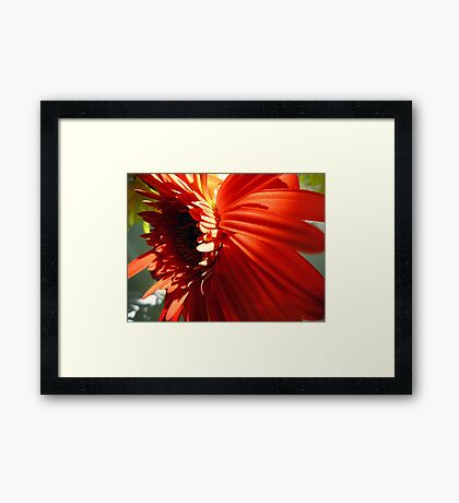 A flower Framed Print