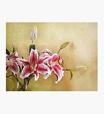 Star Gazer Lilies I Photographic Print
