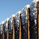 Snow topped fence by moor2sea